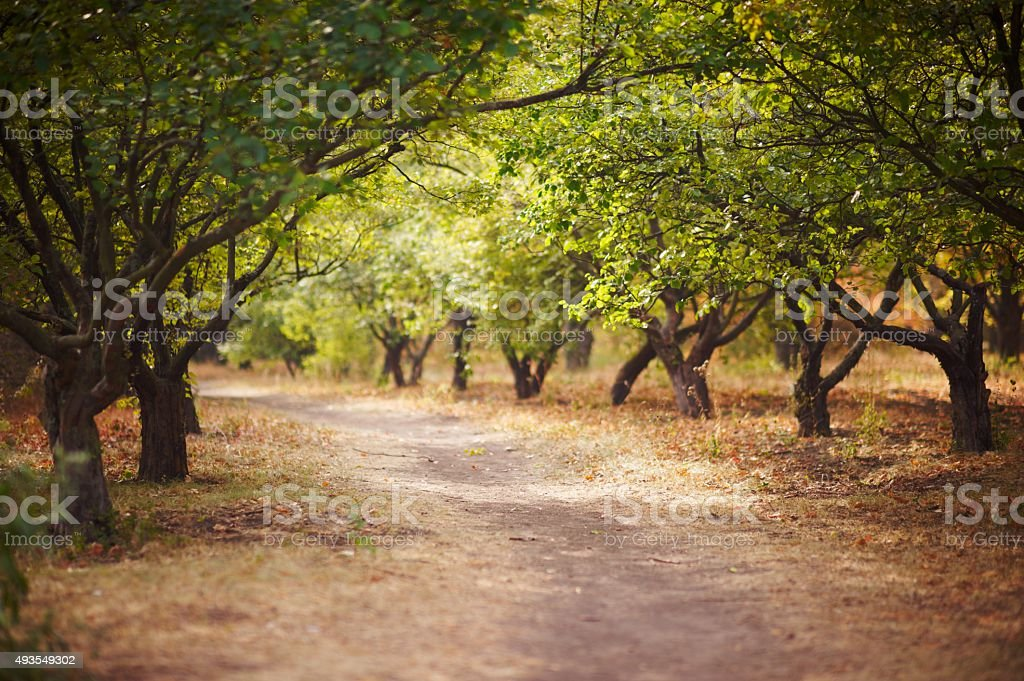 path in autumn orchard stock photo