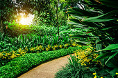 Path in Botanic Garden of Singapore