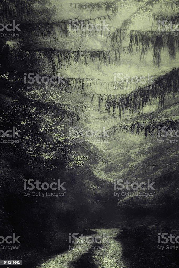 path in dark deep forest stock photo