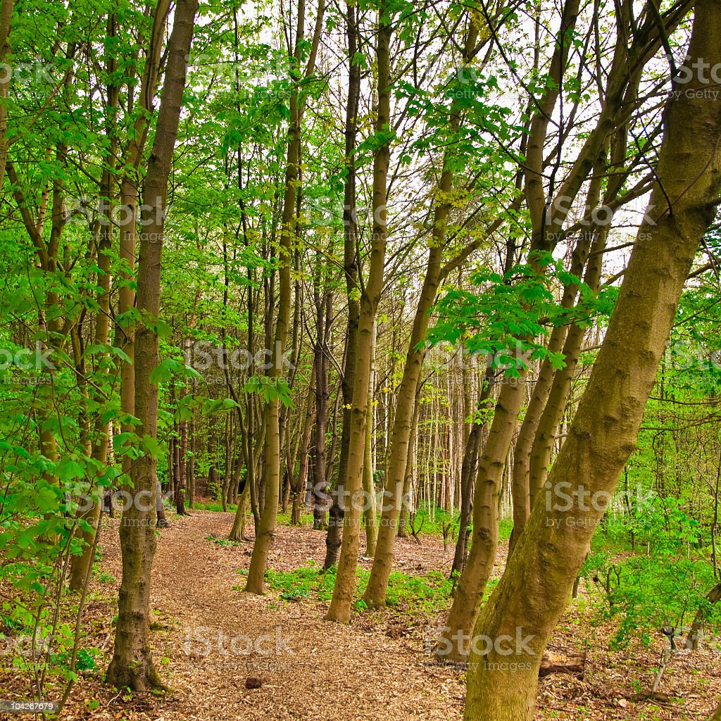 path in forest stock photo