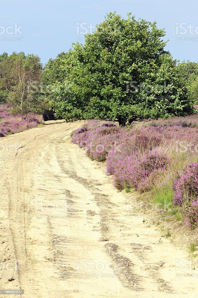 Path in heather field stock photo