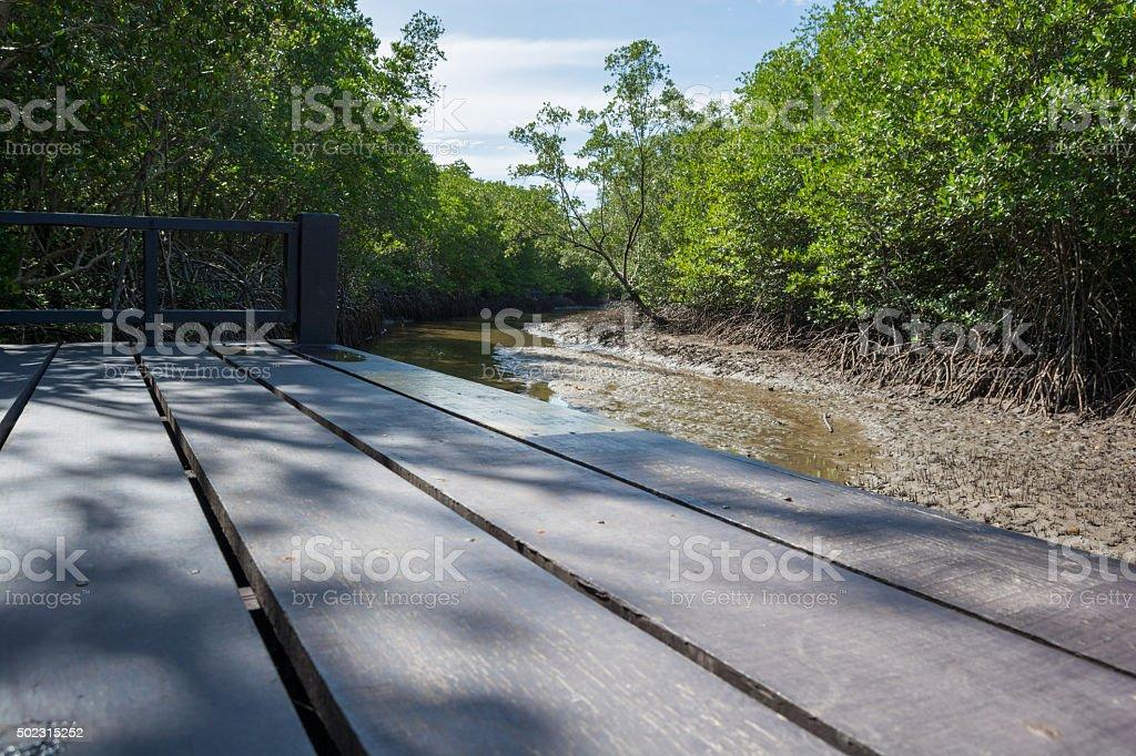 Path in Mangrove forest in Pranburi, thailand stock photo