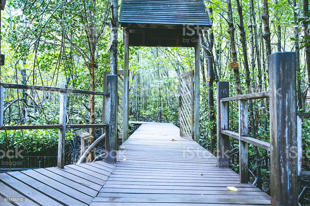 Path in Mangrove forest in thai stock photo