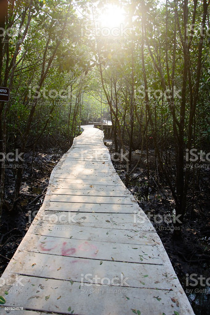 Path in Mangrove forest in Thailand stock photo