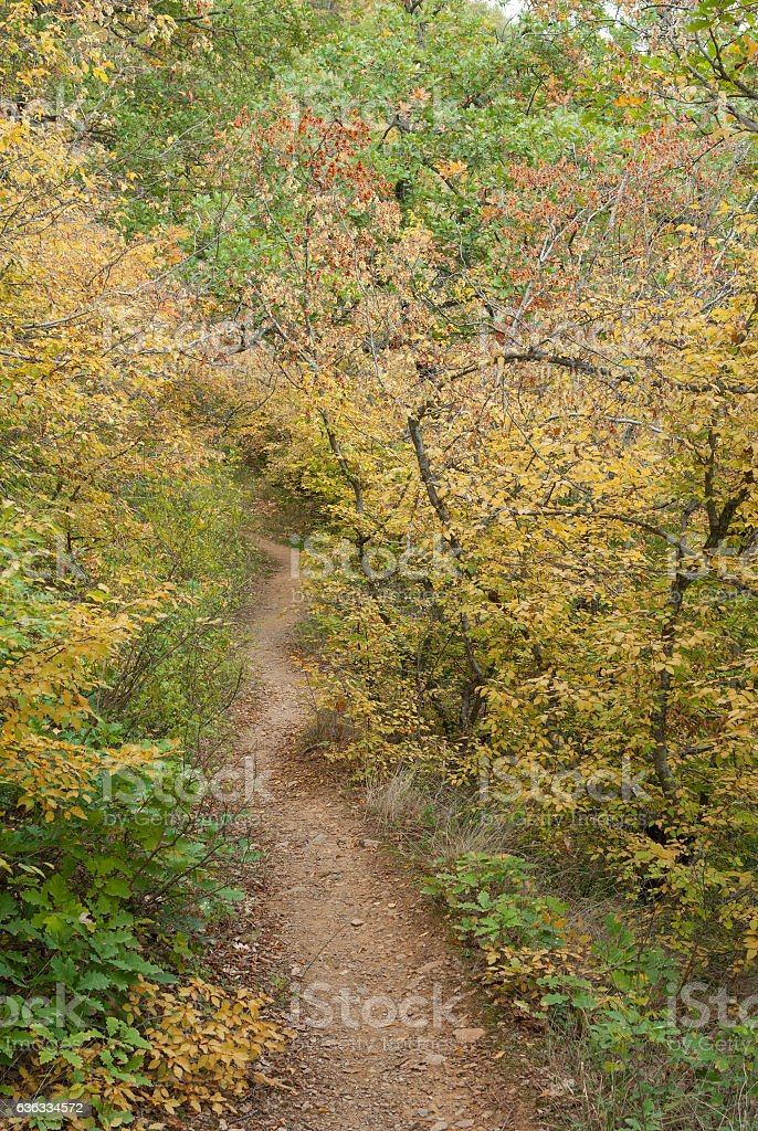 Path in mountain forest at fall season in Crimean peninsula stock photo