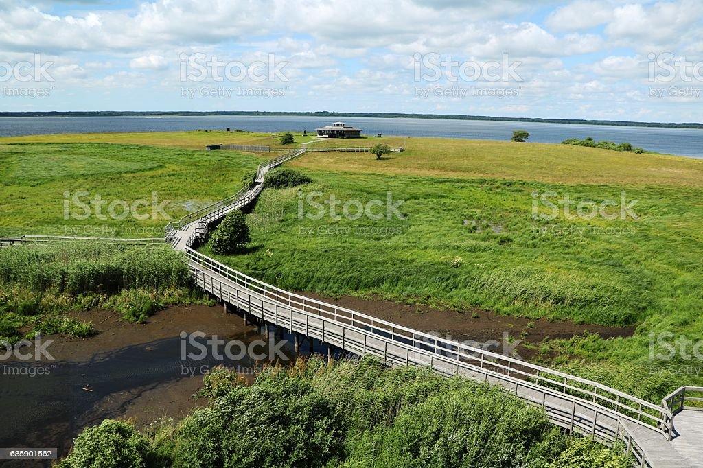 Path in Naturreservat Hornborgasjöns in Sweden at summertime, Scandinavia stock photo