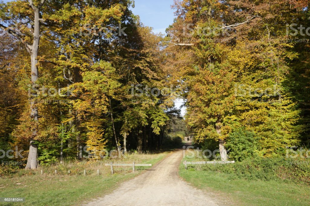Path in oak forest in France stock photo