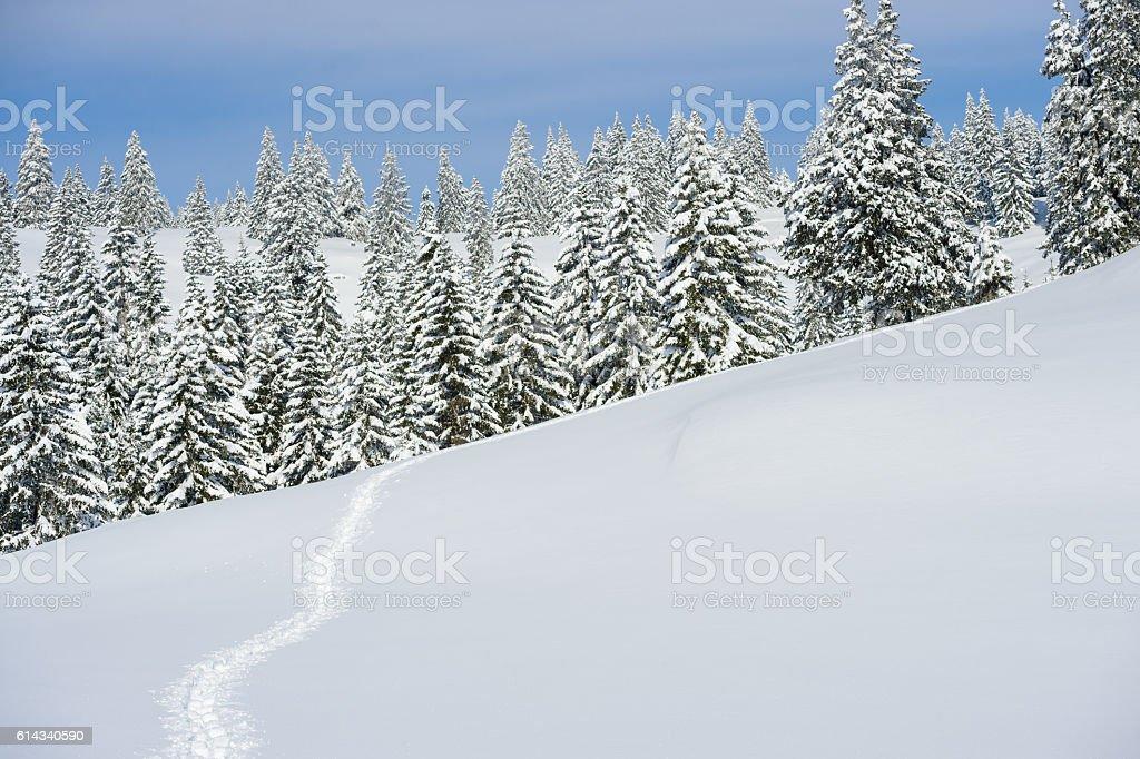 Path In Snow stock photo