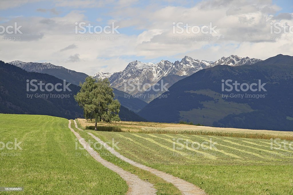 Path in the Alps stock photo