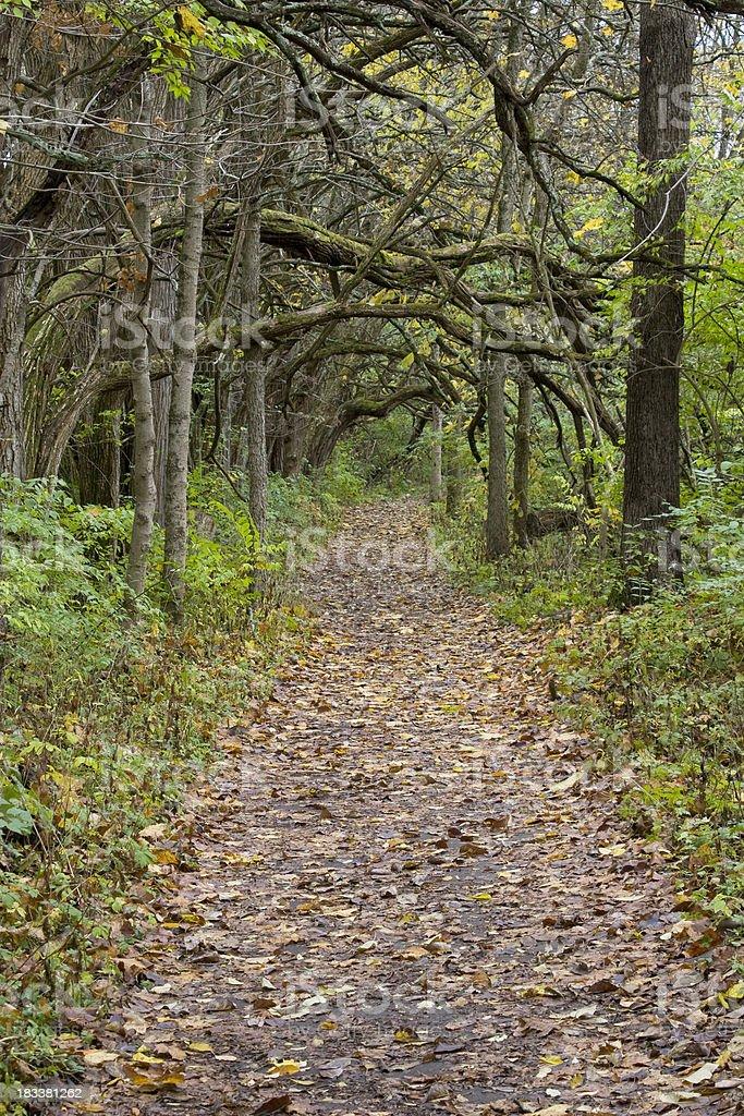 Path In The Autumn Woods, Osage Orange, Bellbrook, Dayton, Ohio stock photo