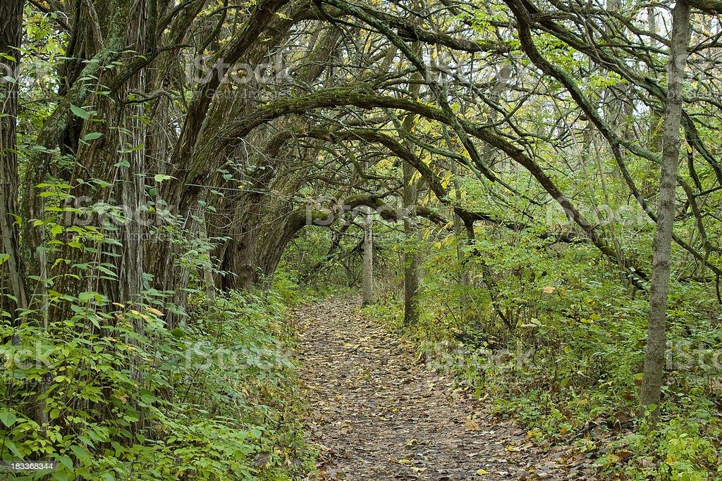 Path In The Autumn Woods, Osage Orange, Dayton, Ohio stock photo