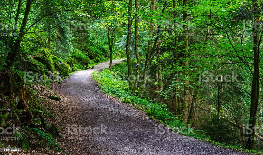 Path in the Black wood in Triberg, Germany stock photo