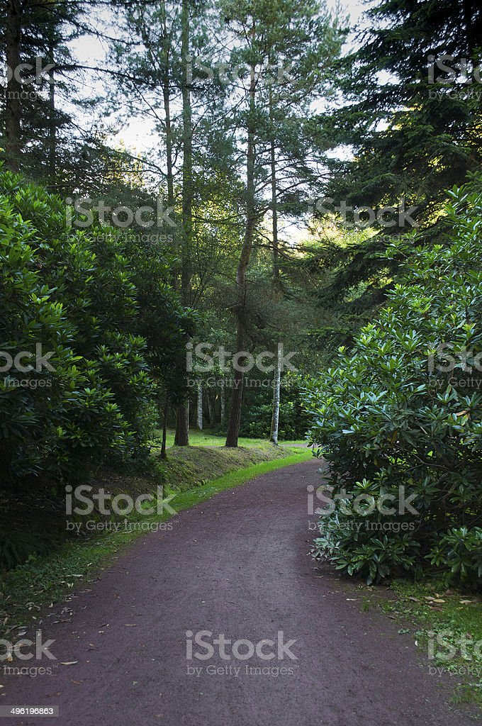 Path in the Brocéliande forest surrounded by green trees stock photo