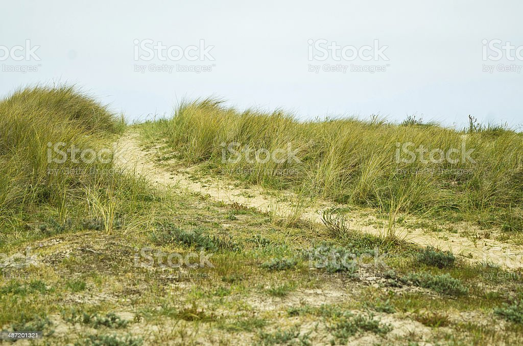 Path in the dune stock photo