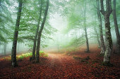 path in the foggy forest