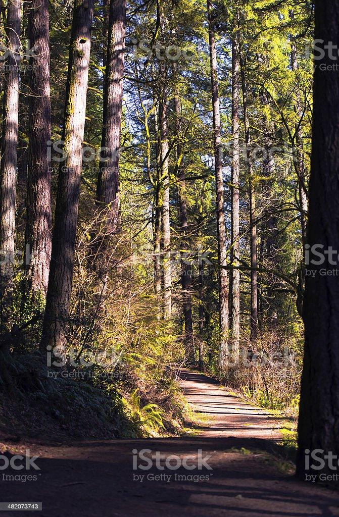 Percorso nella foresta in primavera luce solare foto stock royalty-free