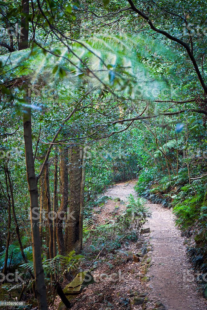 Path in the forest, national park Blue Mountains Australia royalty-free stock photo