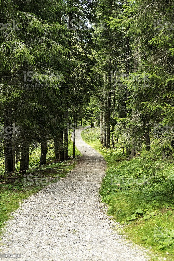 path in the forest of Paneveggio stock photo