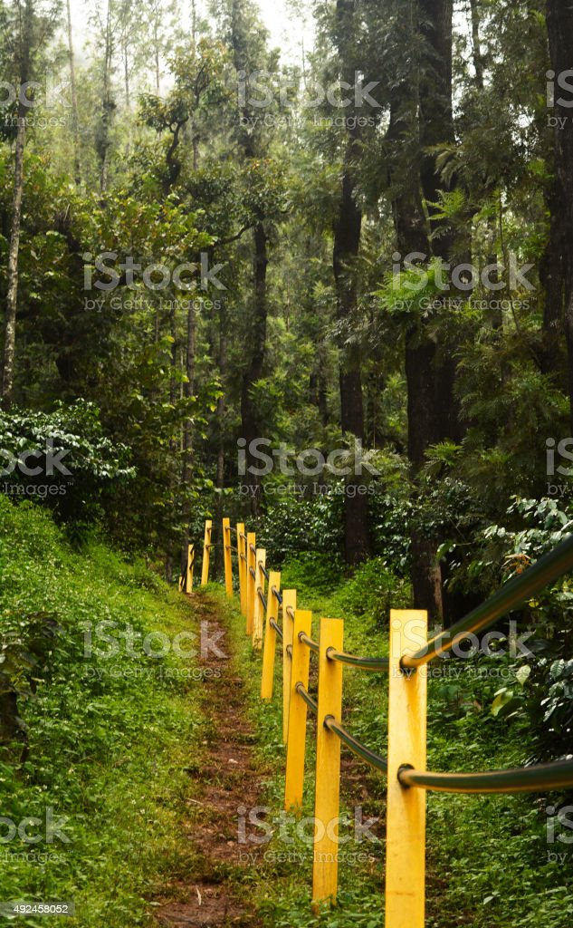 Path in the Forest stock photo