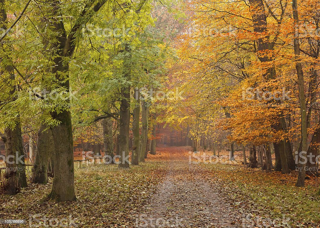 Path in the forest with autumn leaves stock photo