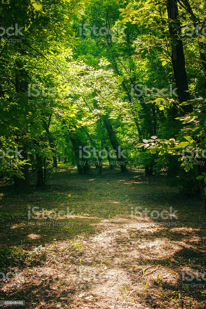 Path in the green forest in summer stock photo