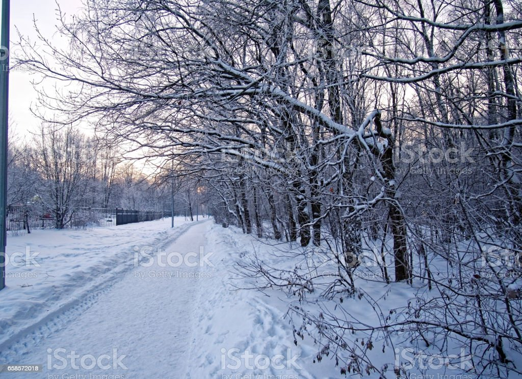 path in the Park in the evening in Moscow stock photo