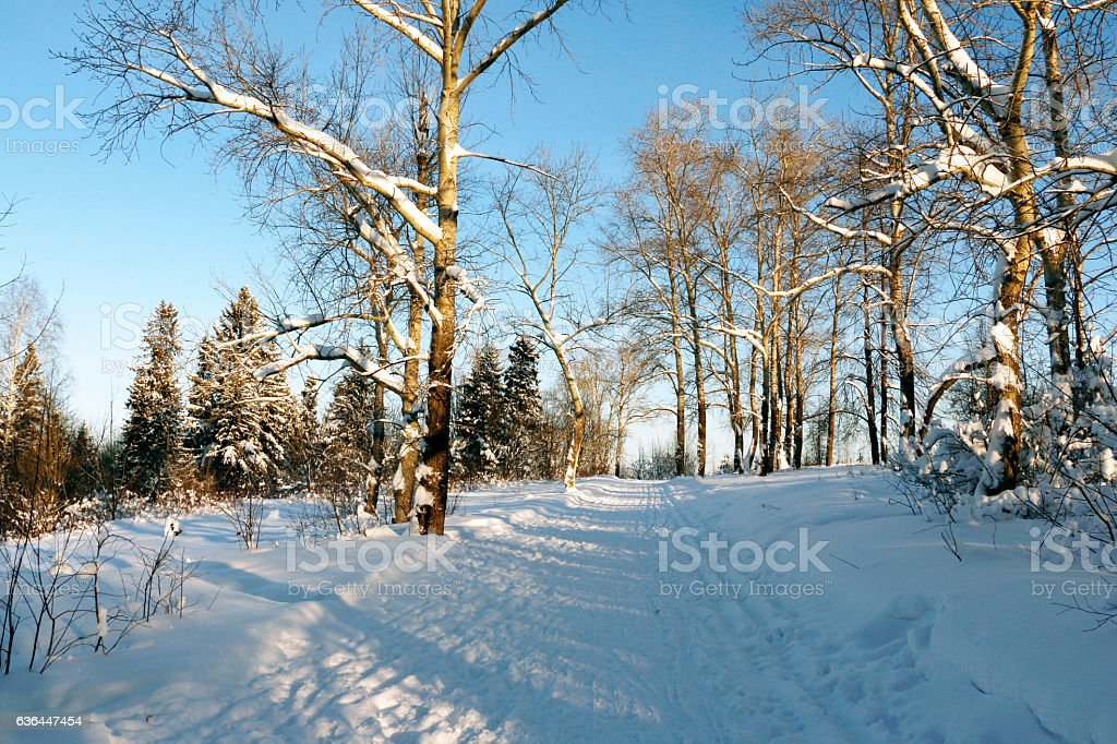 Path in the snow in a cold winter day stock photo