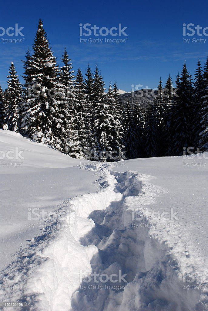 Path in the snow royalty-free stock photo