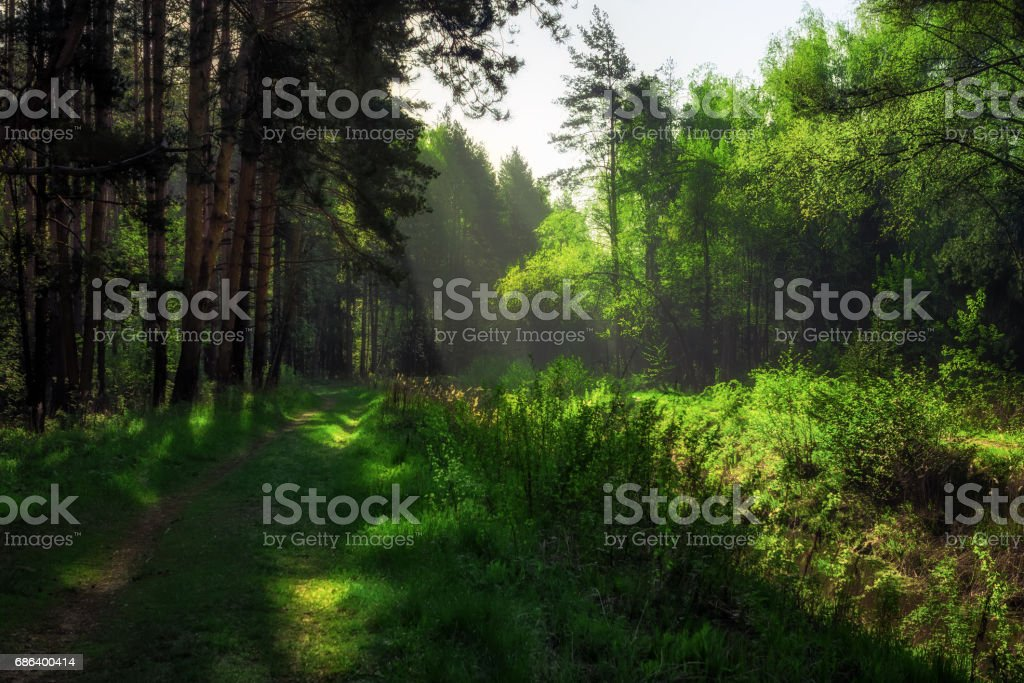 Path In The Summer Forest stock photo