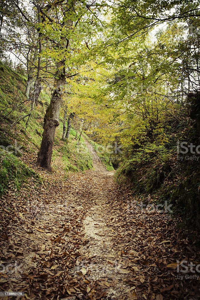 Path in the Wood royalty-free stock photo