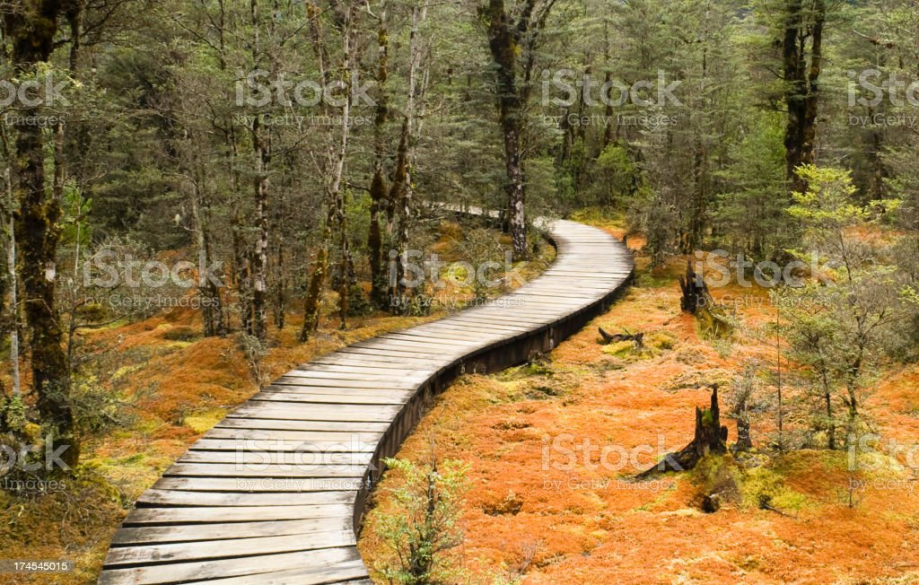 Path in the woods royalty-free stock photo