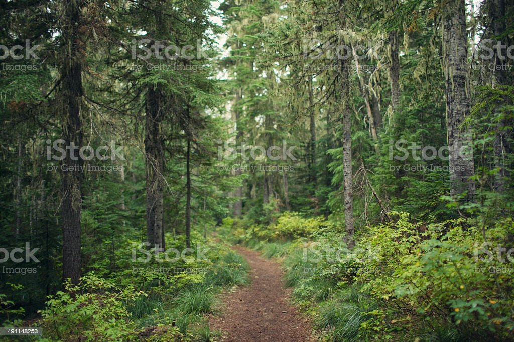 Path in the woods stock photo