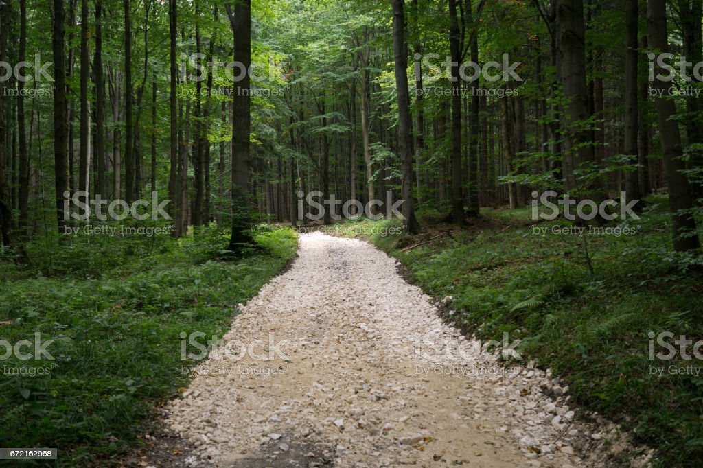 Path in the woods. stock photo