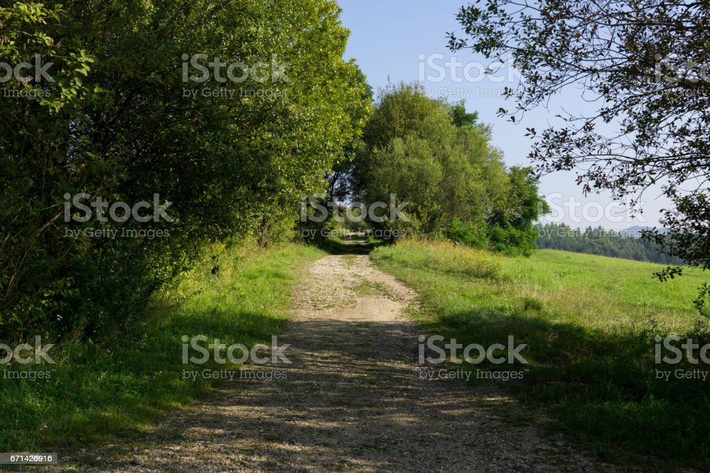 Path in the woods. Slovakia stock photo