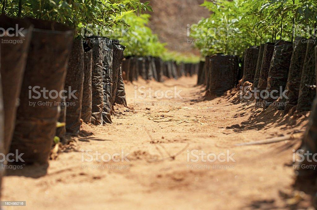 Path in Tree Nursery stock photo