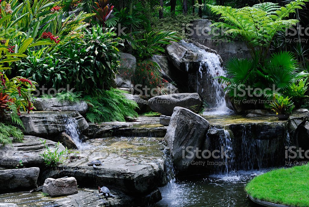 Path in tropical rain forest royalty-free stock photo