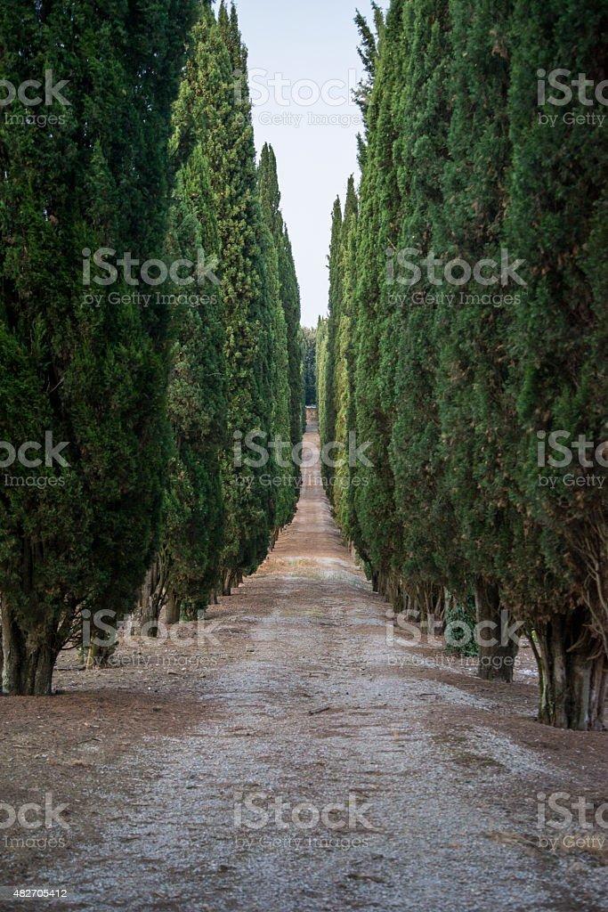 Path in Tuscany stock photo