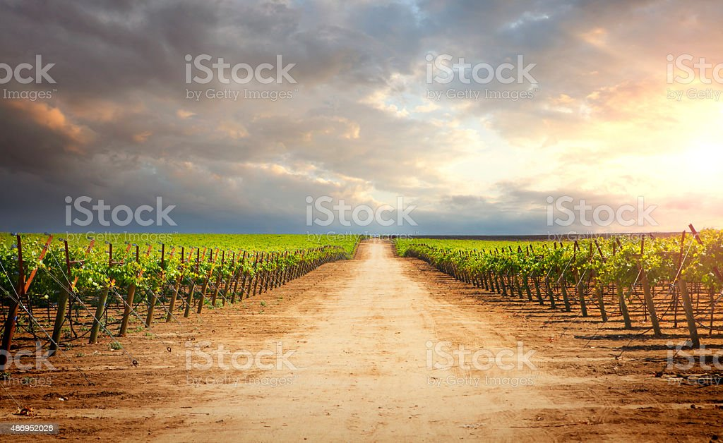 Path in vineyard by sunset stock photo