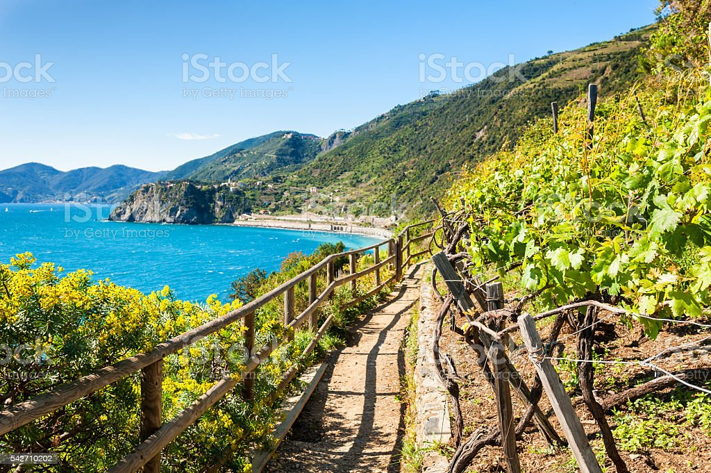Path in vineyards, beautiful view of the sea stock photo