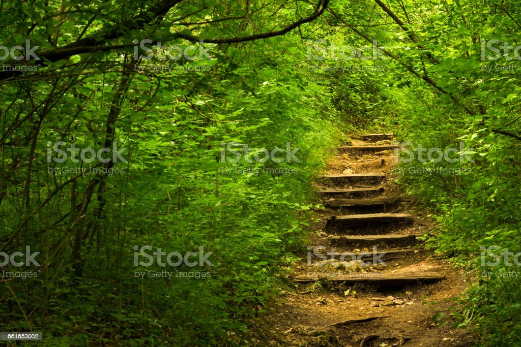 Path leading into the forest stock photo