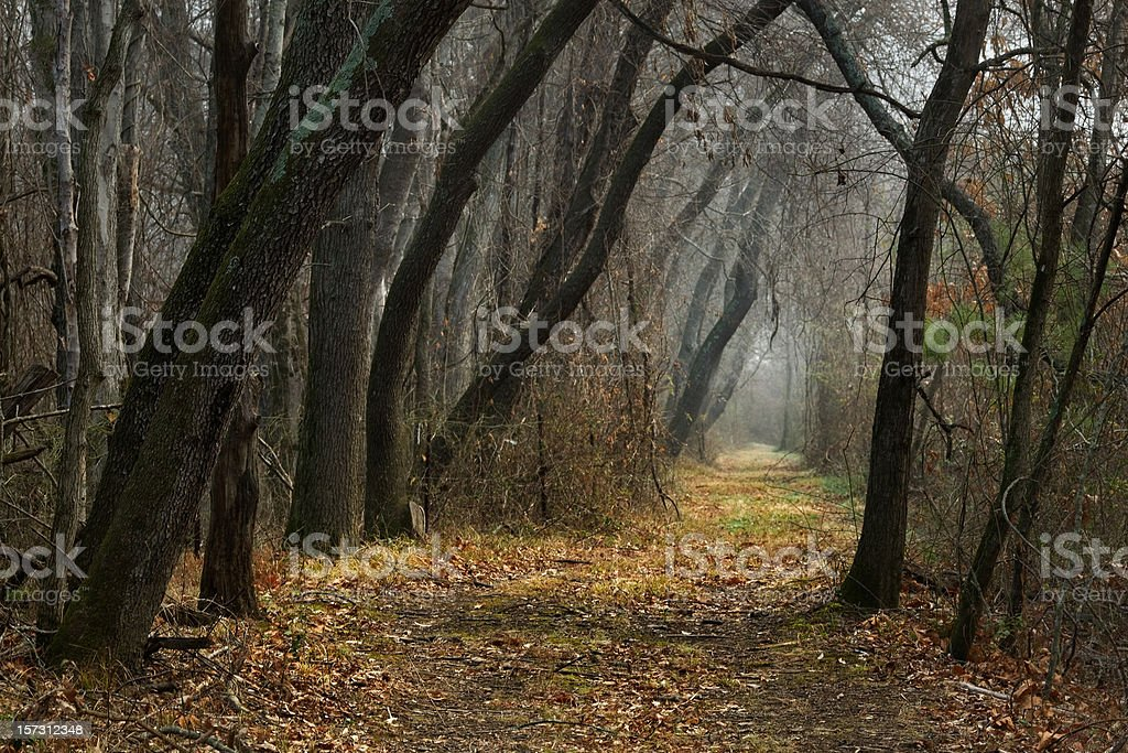 A path leading through a bare forest royalty-free stock photo