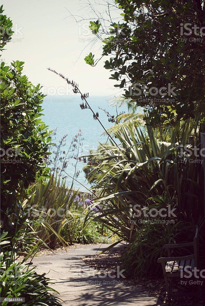 Path leading through Harakeke (New Zealand Flax)  to Beach stock photo
