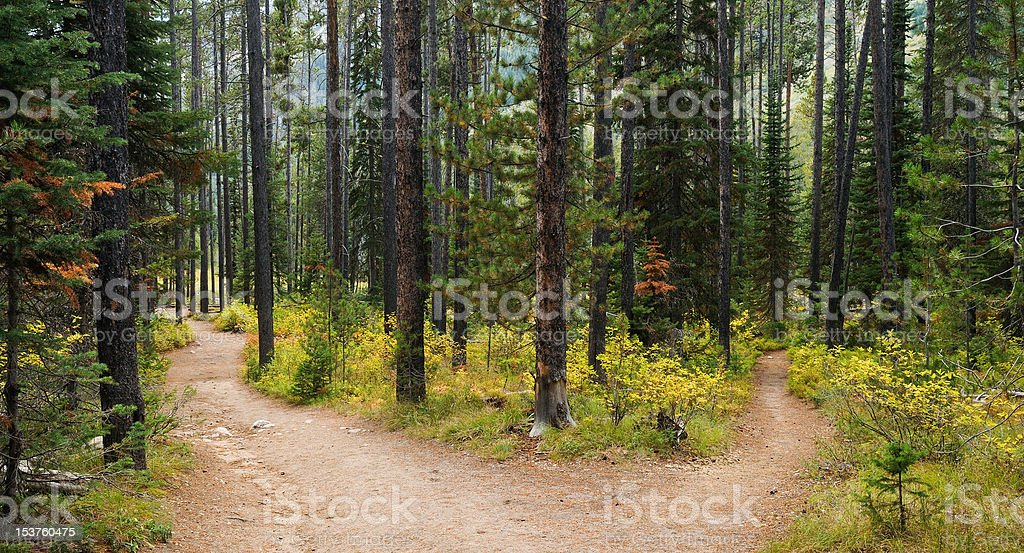 Path leading two ways in the Forest royalty-free stock photo