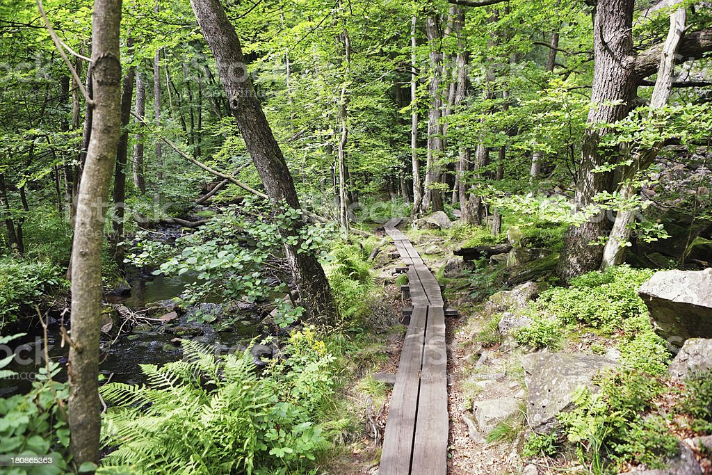 path leads through Swedish forest royalty-free stock photo