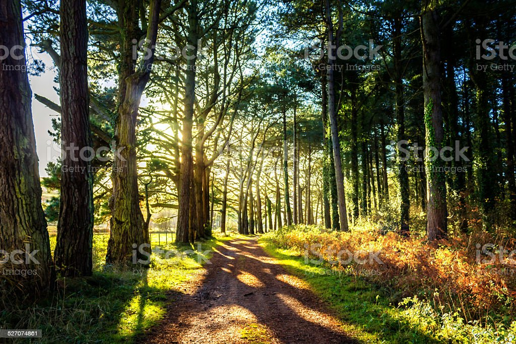 Path lined by trees with sun shining through stock photo