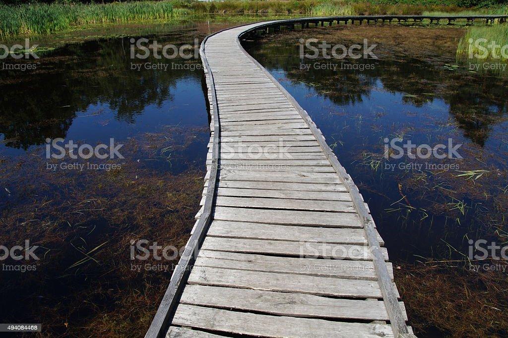 Path of life - choice stock photo