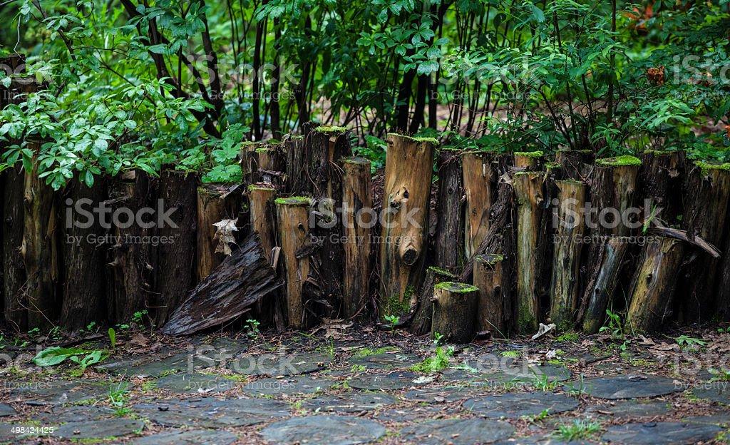 path of logs stock photo