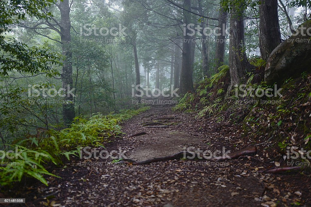 Path of the forest stock photo