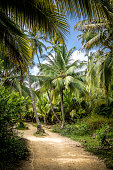 Path on a Palm Tree Forest - Tayrona Park, Colombia
