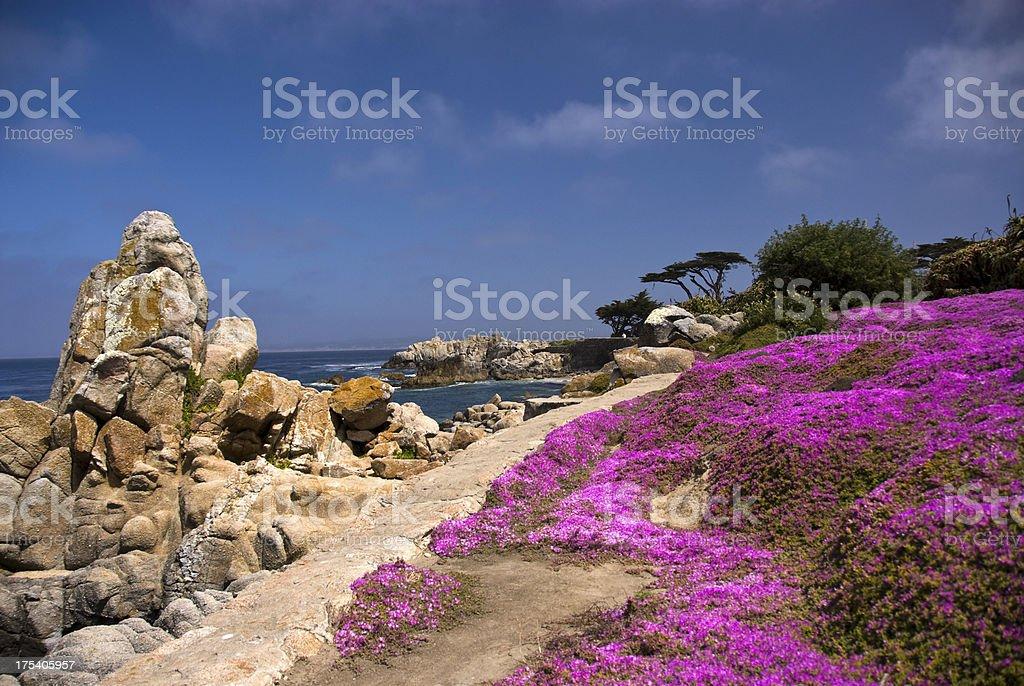 Path on Shoreline in Pacific Grove, California stock photo